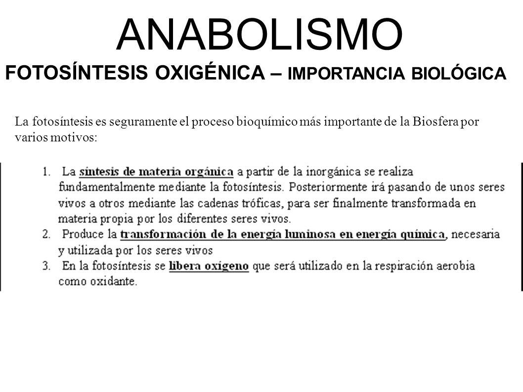 ANABOLISMO FOTOSÍNTESIS OXIGÉNICA – IMPORTANCIA BIOLÓGICA