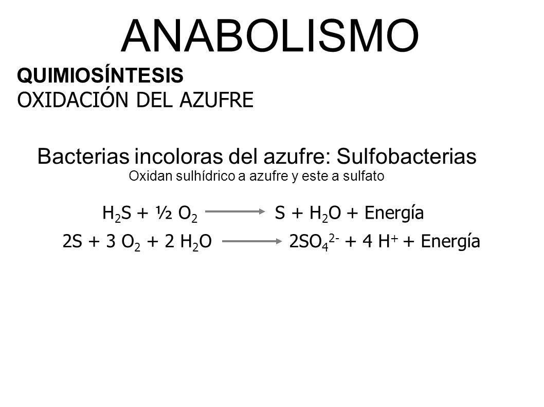 2S + 3 O2 + 2 H2O 2SO42- + 4 H+ + Energía