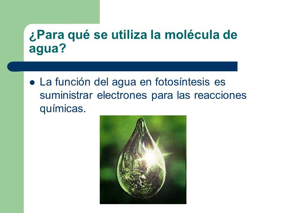 ¿Para qué se utiliza la molécula de agua