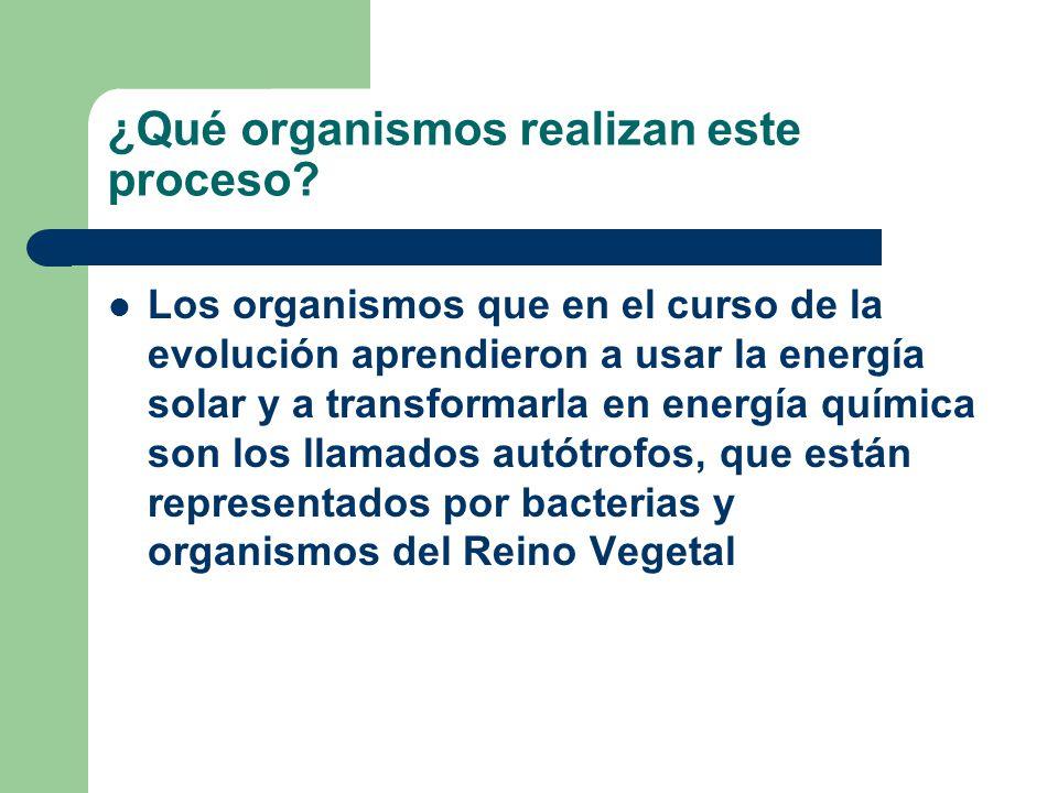 ¿Qué organismos realizan este proceso