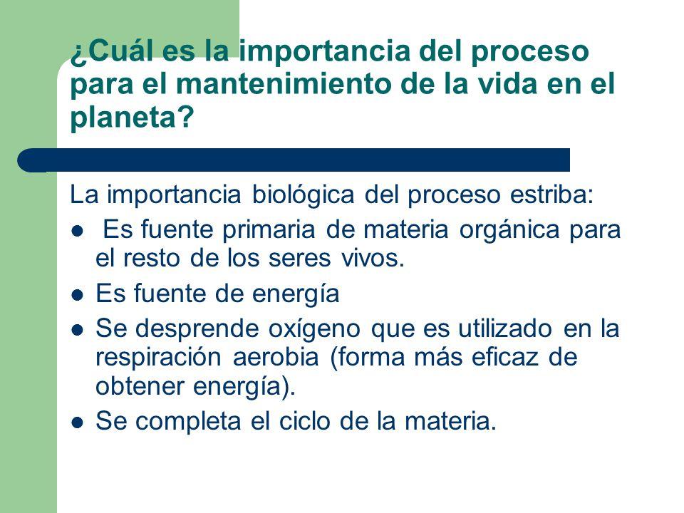 ¿Cuál es la importancia del proceso para el mantenimiento de la vida en el planeta