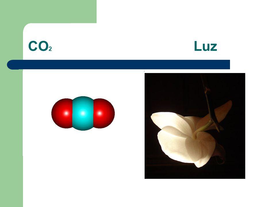 CO2 Luz
