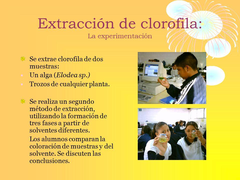 Extracción de clorofila: La experimentación
