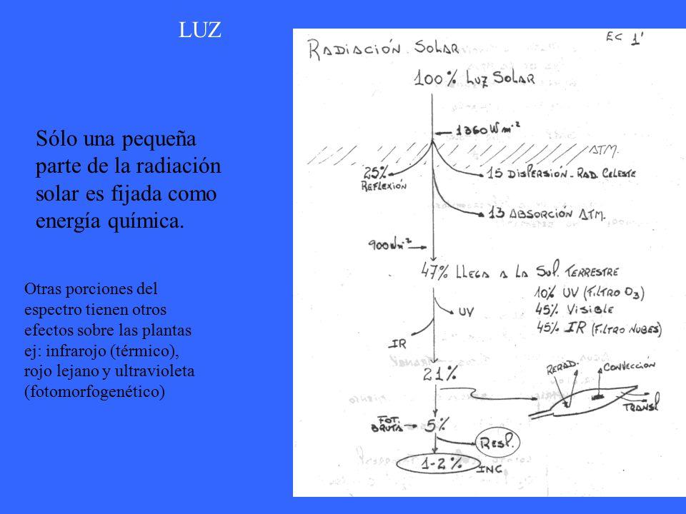 LUZ Sólo una pequeña parte de la radiación solar es fijada como energía química.