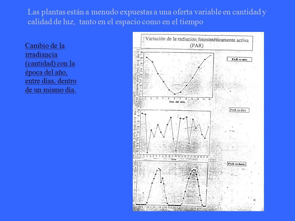 Las plantas están a menudo expuestas a una oferta variable en cantidad y calidad de luz, tanto en el espacio como en el tiempo