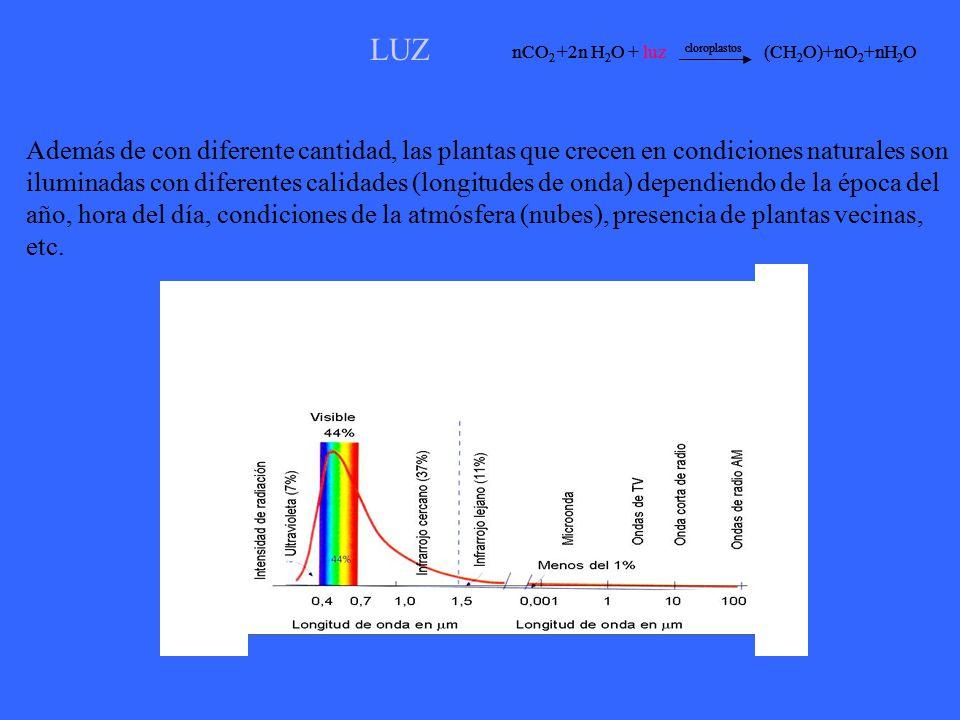 LUZ nCO2 +2n H2O + luz cloroplastos (CH2O)+nO2+nH2O. nCO2 +2n H2O + luz cloroplastos (CH2O)+nO2+nH2O.