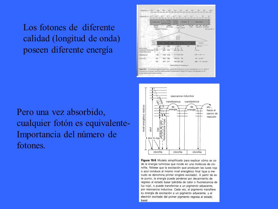Los fotones de diferente calidad (longitud de onda) poseen diferente energía