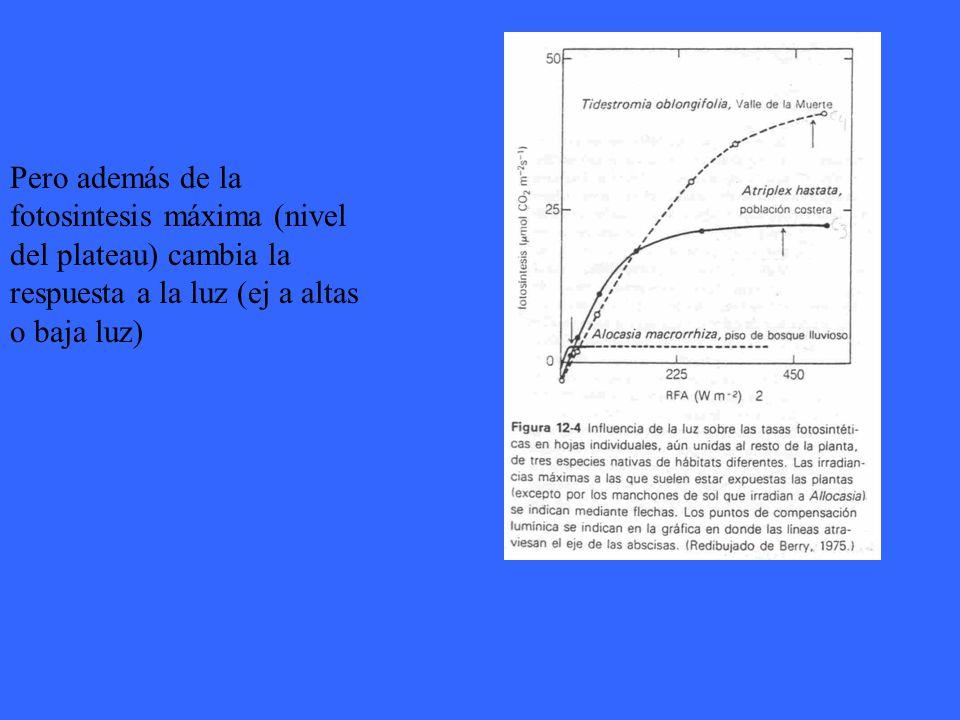 Pero además de la fotosintesis máxima (nivel del plateau) cambia la respuesta a la luz (ej a altas o baja luz)