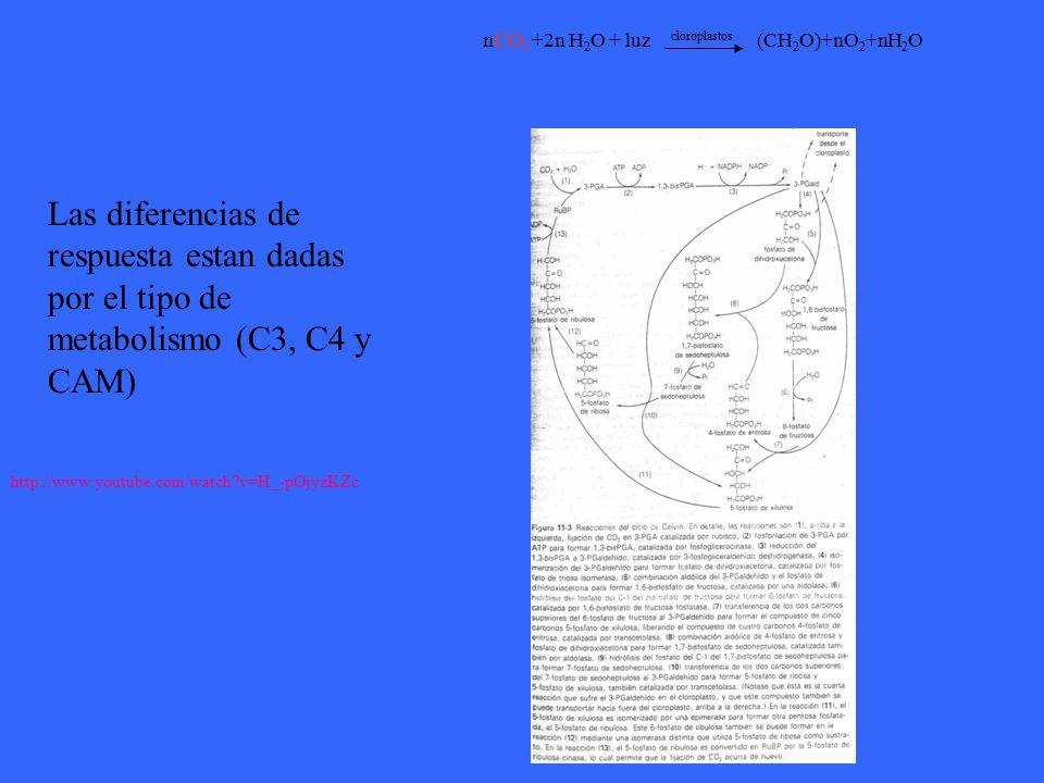 nCO2 +2n H2O + luz cloroplastos (CH2O)+nO2+nH2O