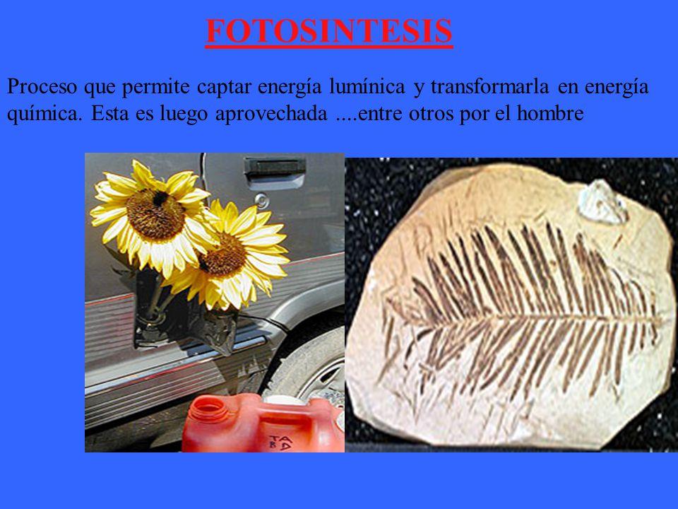 FOTOSINTESIS Proceso que permite captar energía lumínica y transformarla en energía química.