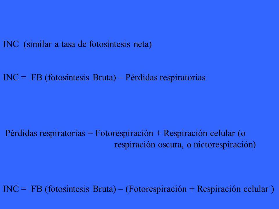 INC (similar a tasa de fotosíntesis neta)