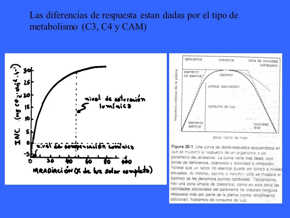 Las diferencias de respuesta estan dadas por el tipo de metabolismo (C3, C4 y CAM)