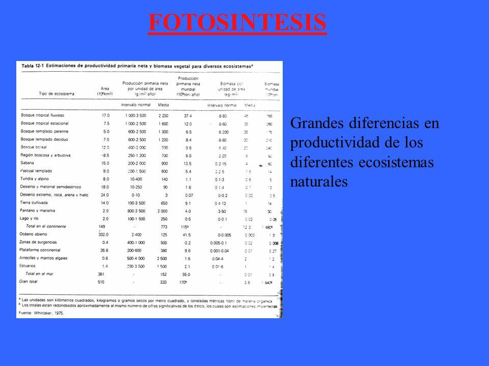 FOTOSINTESIS Grandes diferencias en productividad de los diferentes ecosistemas naturales