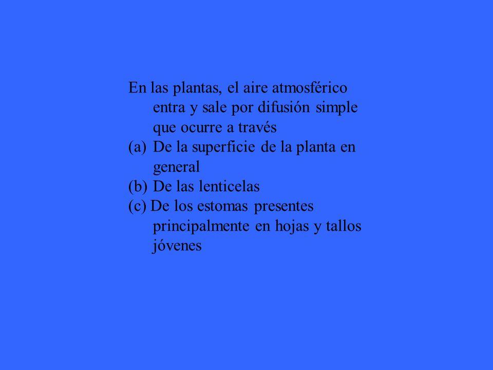 En las plantas, el aire atmosférico entra y sale por difusión simple que ocurre a través