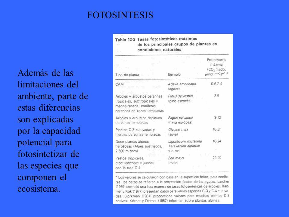 FOTOSINTESIS