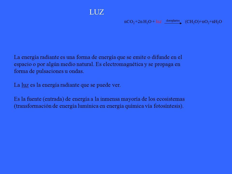 LUZ nCO2 +2n H2O + luz cloroplastos (CH2O)+nO2+nH2O.