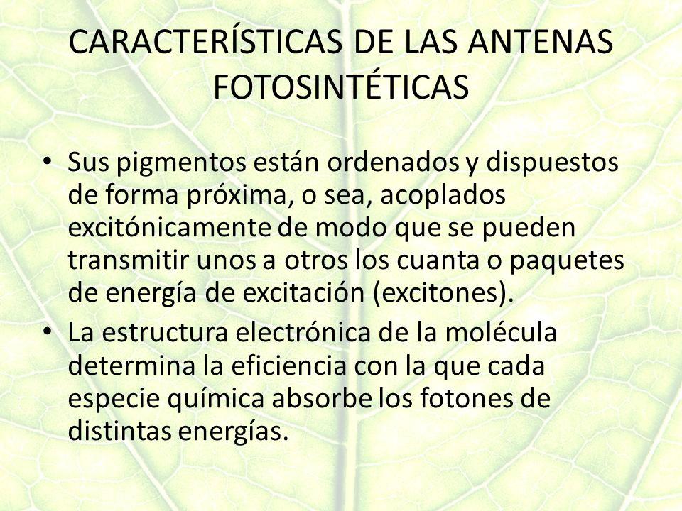 CARACTERÍSTICAS DE LAS ANTENAS FOTOSINTÉTICAS