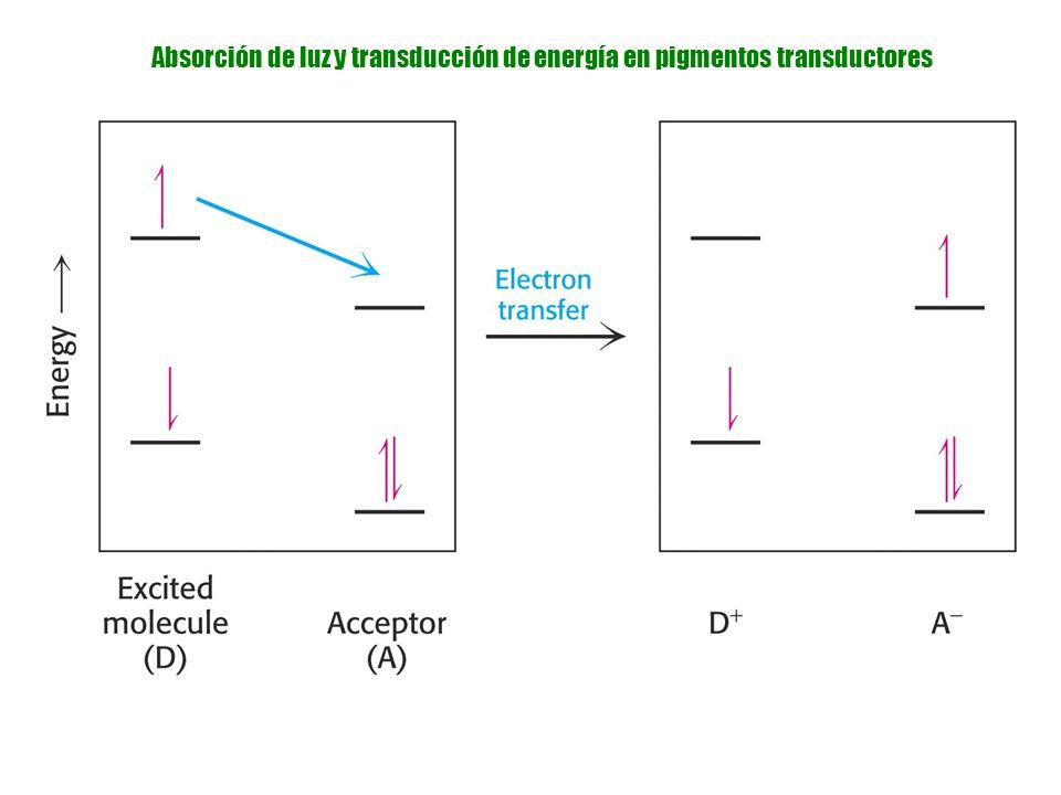 Absorción de luz y transducción de energía en pigmentos transductores