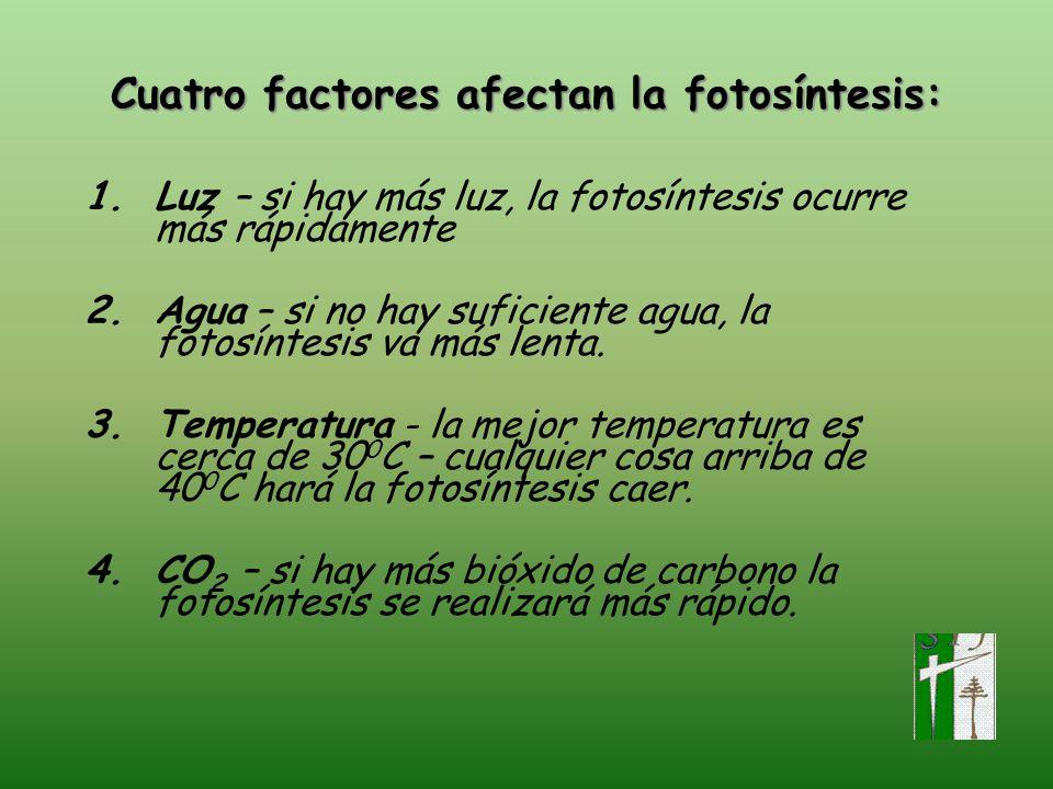 Cuatro factores afectan la fotosíntesis: