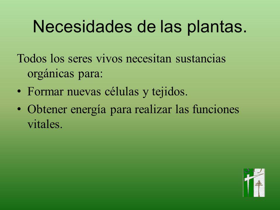 Necesidades de las plantas.