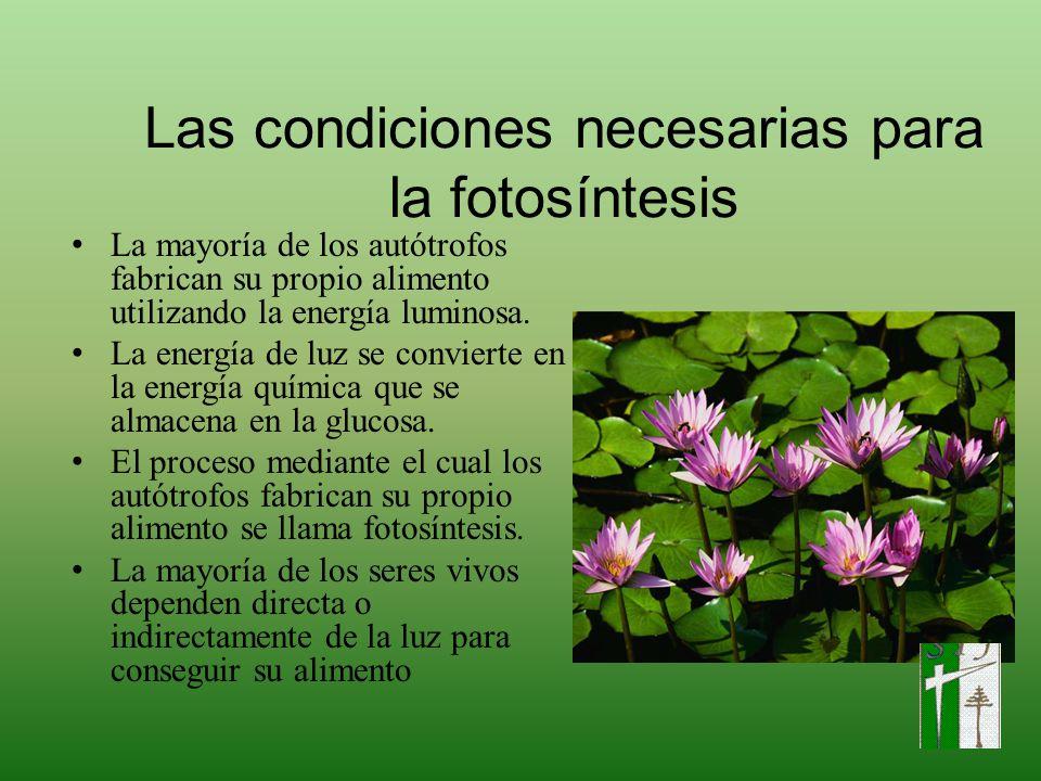 Las condiciones necesarias para la fotosíntesis