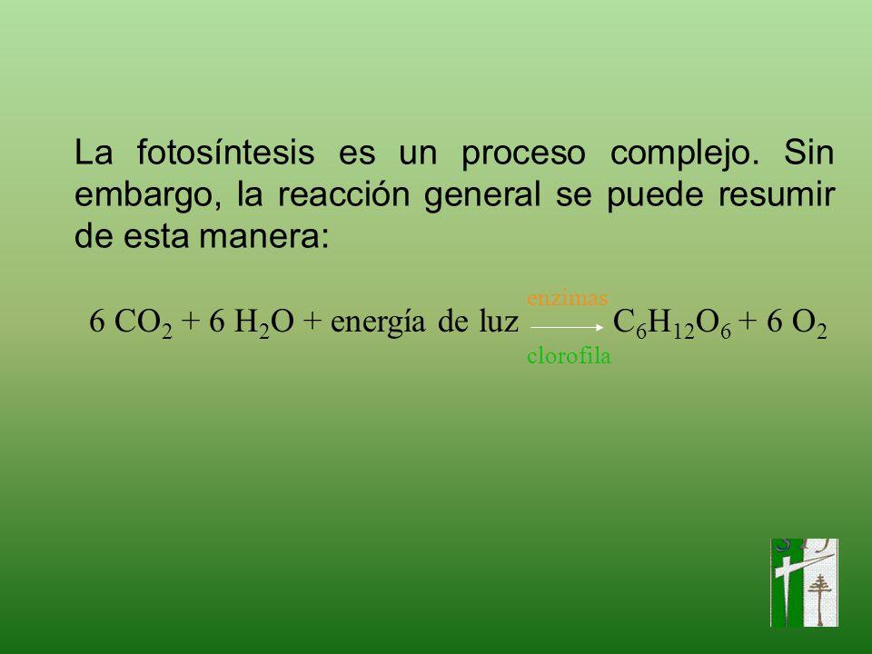 La fotosíntesis es un proceso complejo