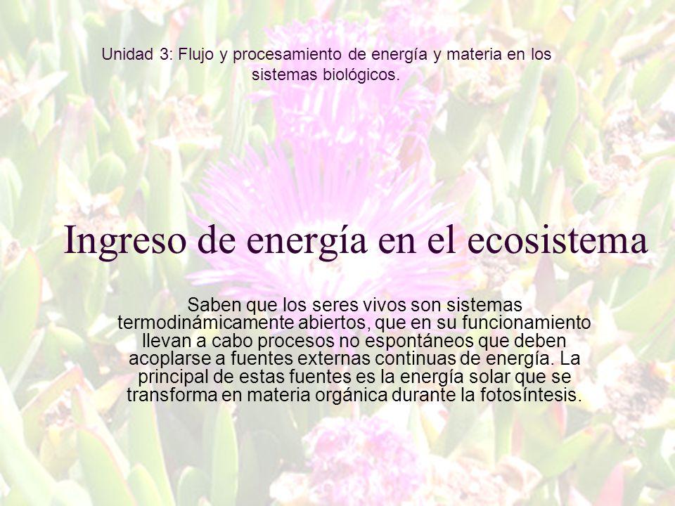 Ingreso de energía en el ecosistema