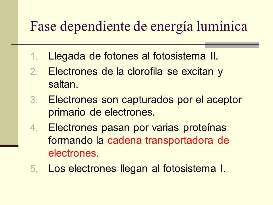 Fase dependiente de energía lumínica