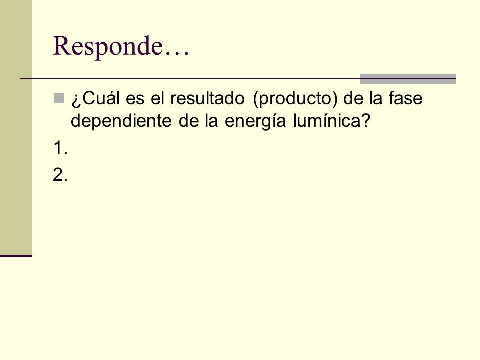 Responde… ¿Cuál es el resultado (producto) de la fase dependiente de la energía lumínica 1. 2.