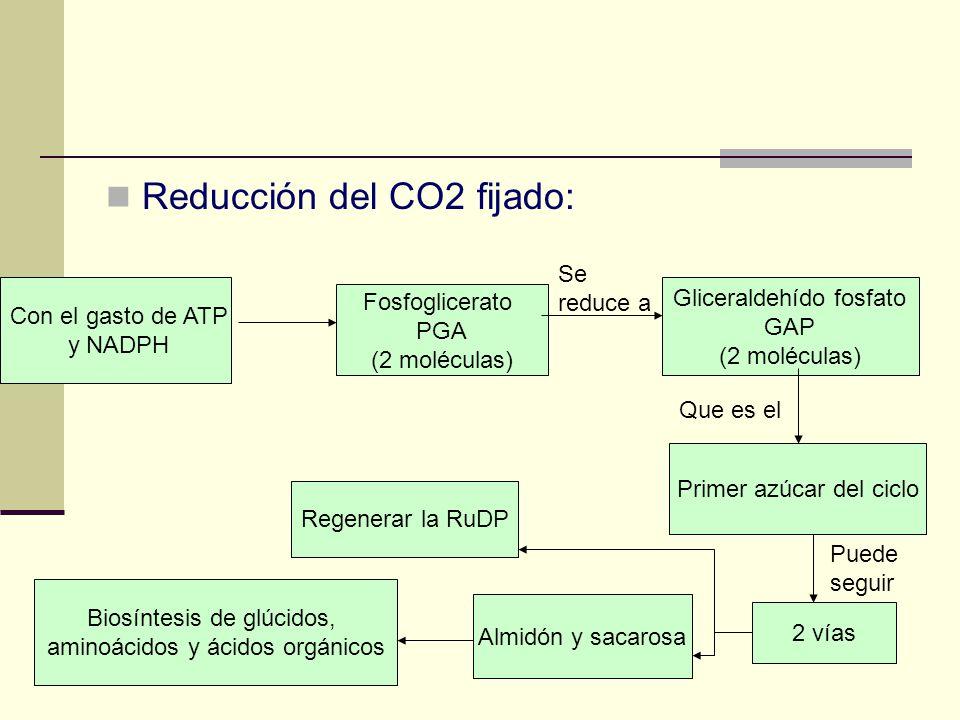 Reducción del CO2 fijado: