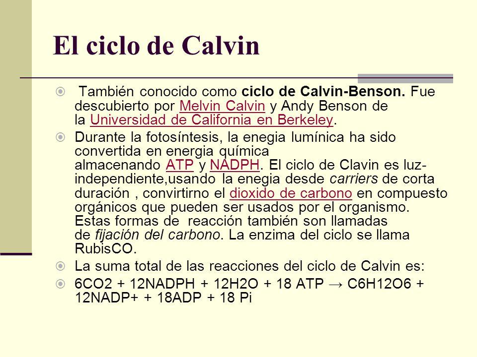 El ciclo de Calvin