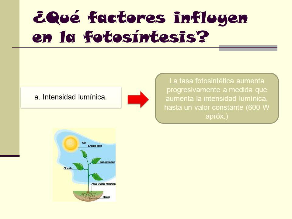 ¿Qué factores influyen en la fotosíntesis