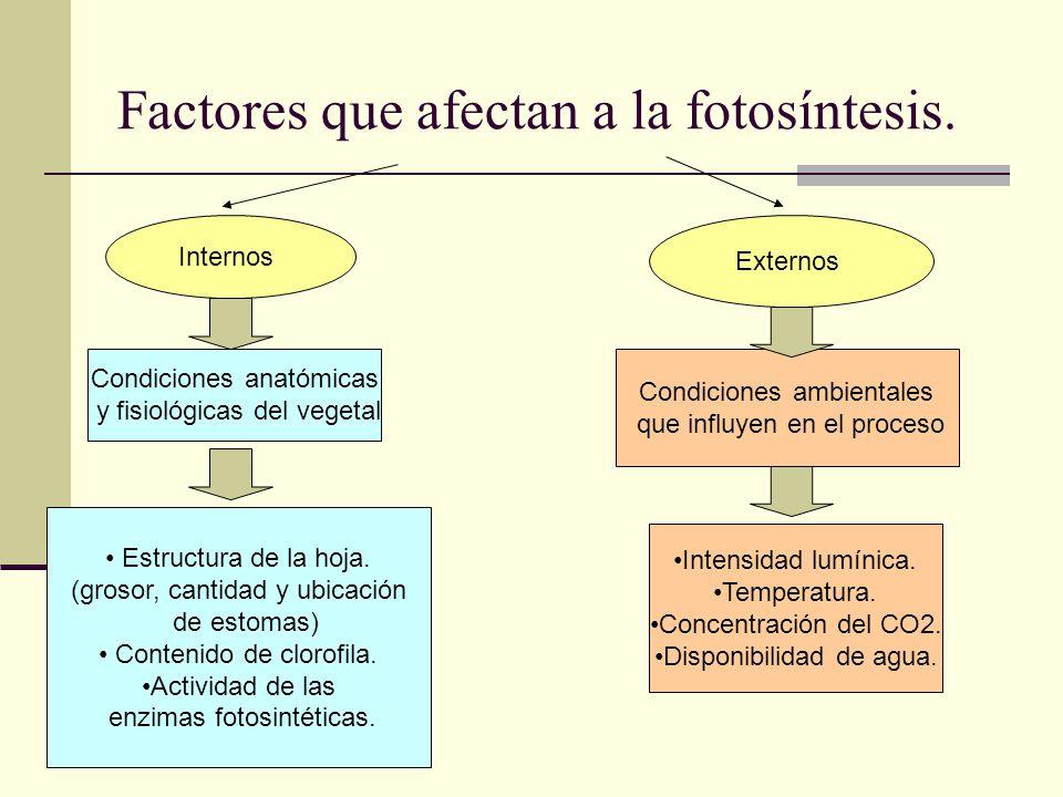 Factores que afectan a la fotosíntesis.