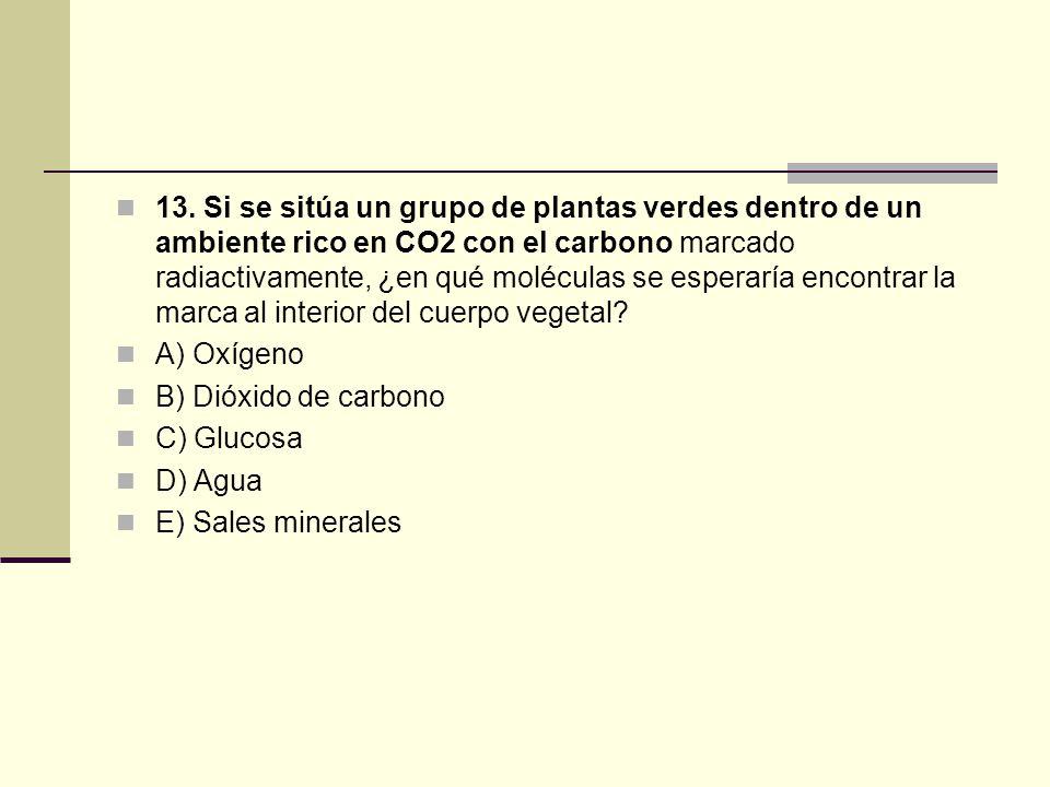 13. Si se sitúa un grupo de plantas verdes dentro de un ambiente rico en CO2 con el carbono marcado radiactivamente, ¿en qué moléculas se esperaría encontrar la marca al interior del cuerpo vegetal