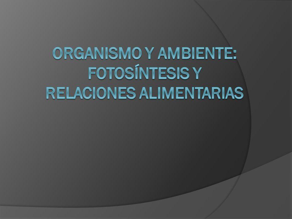Organismo y ambiente: Fotosíntesis y relaciones alimentarias