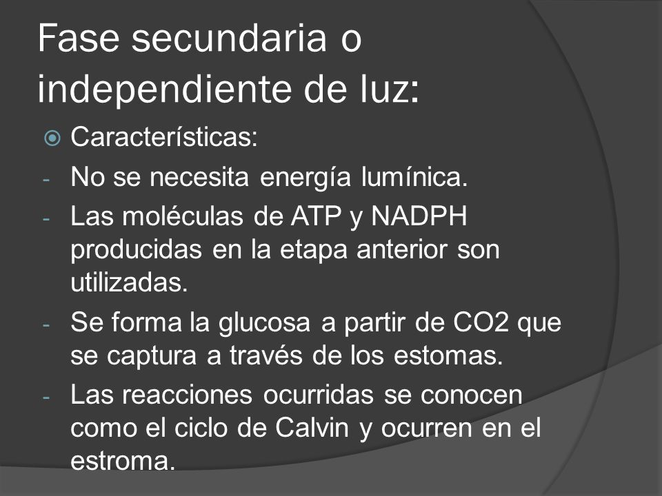 Fase secundaria o independiente de luz: