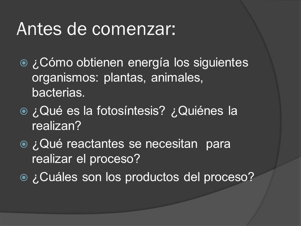 Antes de comenzar: ¿Cómo obtienen energía los siguientes organismos: plantas, animales, bacterias. ¿Qué es la fotosíntesis ¿Quiénes la realizan