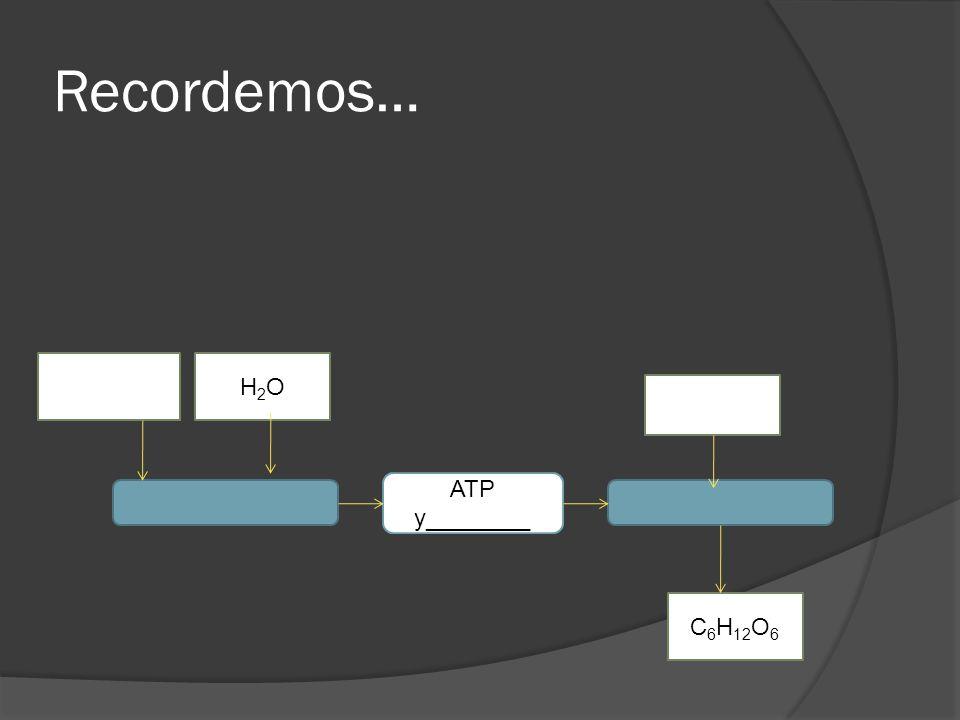 Recordemos… H2O ATP y________ C6H12O6