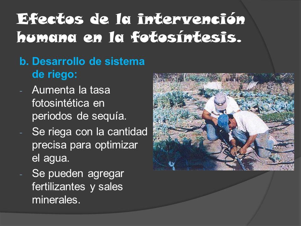 Efectos de la intervención humana en la fotosíntesis.