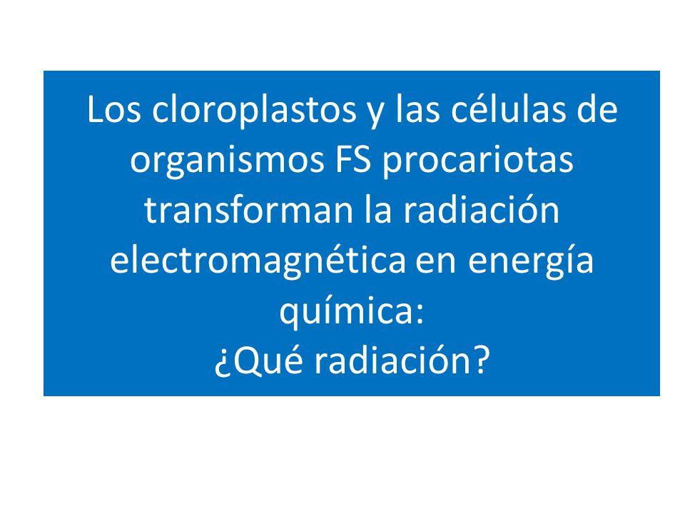 Los cloroplastos y las células de organismos FS procariotas transforman la radiación electromagnética en energía química: ¿Qué radiación