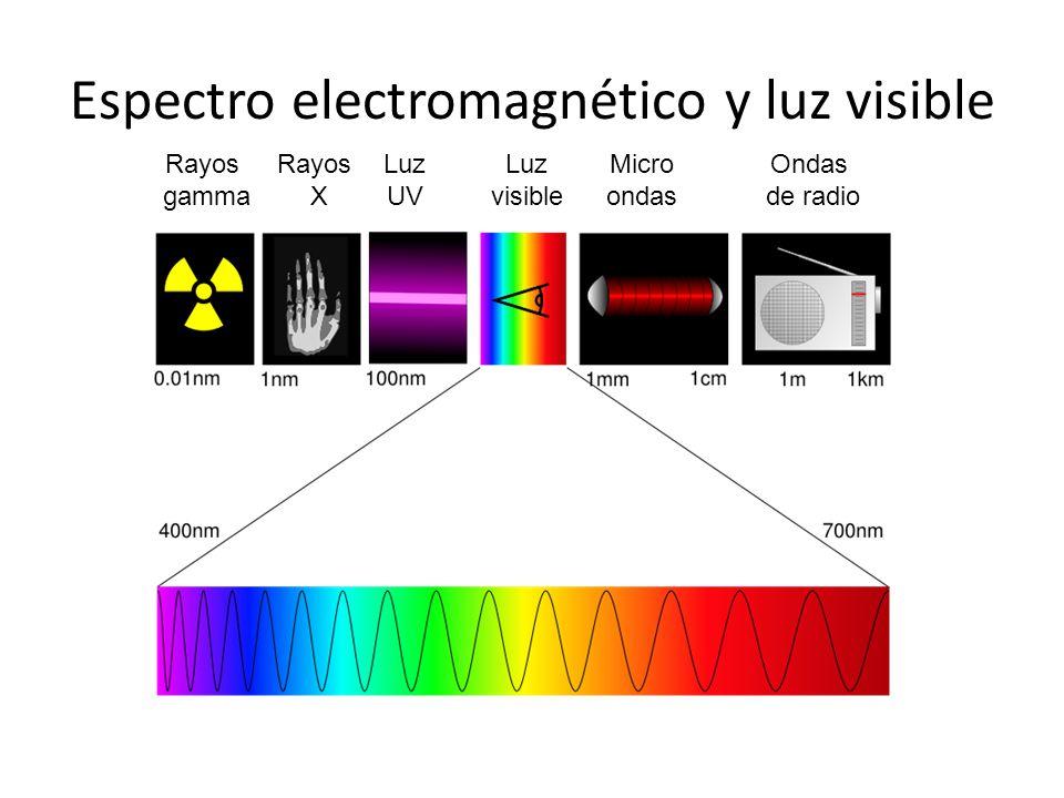 Espectro electromagnético y luz visible
