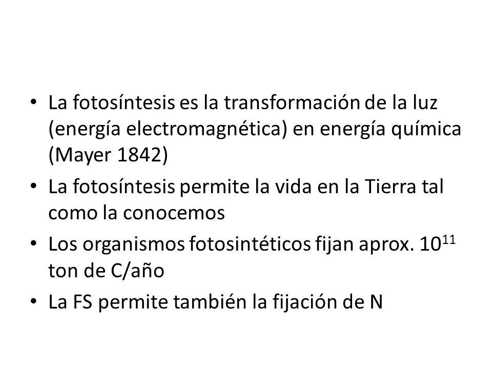 La fotosíntesis es la transformación de la luz (energía electromagnética) en energía química (Mayer 1842)