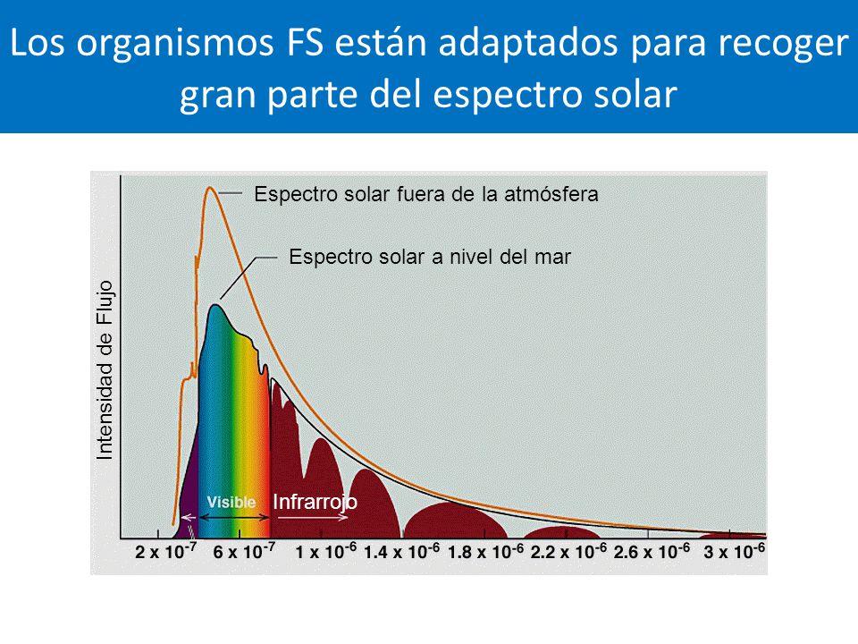 Los organismos FS están adaptados para recoger gran parte del espectro solar