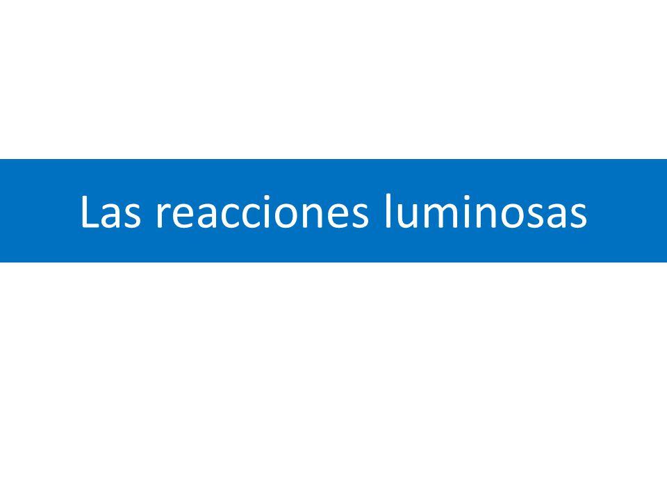 Las reacciones luminosas