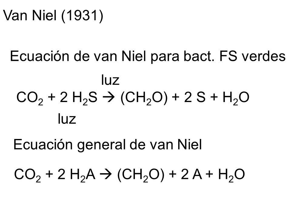Van Niel (1931) Ecuación de van Niel para bact. FS verdes. luz. CO2 + 2 H2S  (CH2O) + 2 S + H2O.
