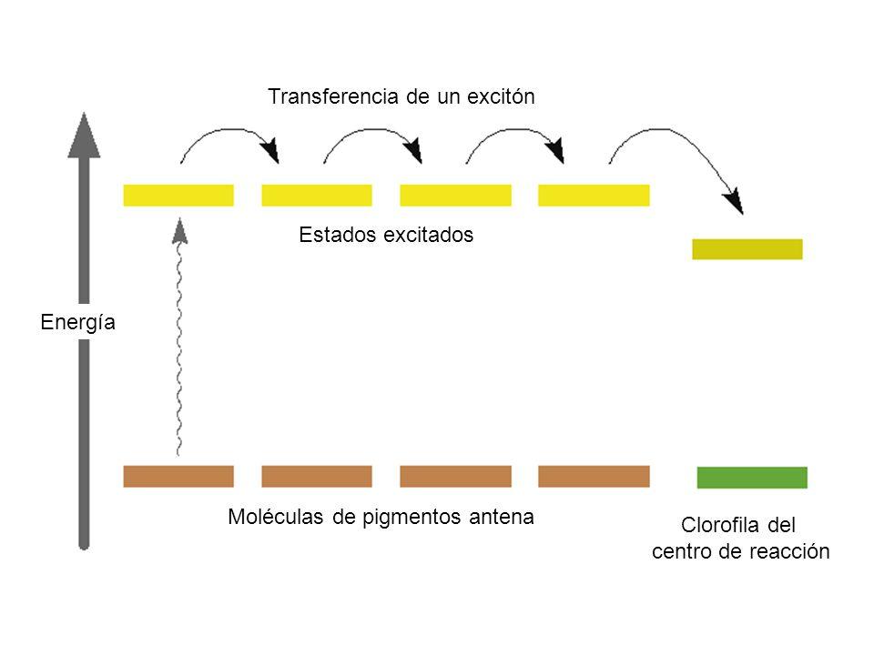 Transferencia de un excitón