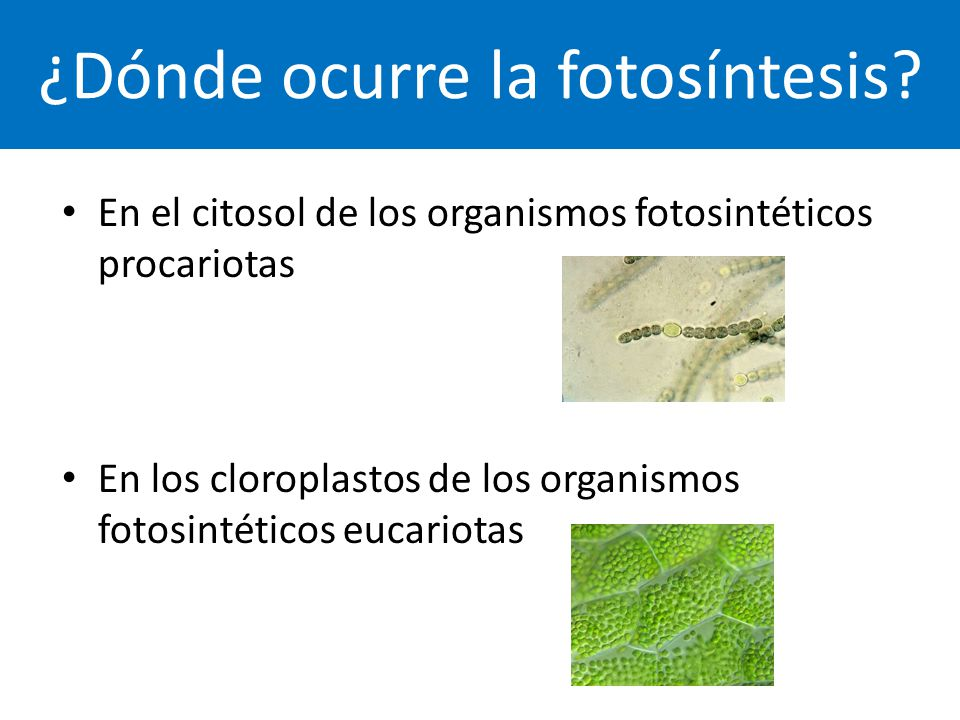 ¿Dónde ocurre la fotosíntesis