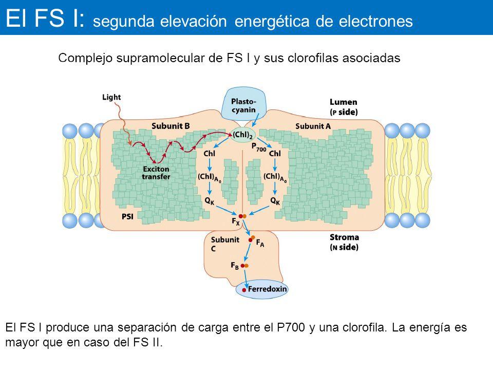 El FS I: segunda elevación energética de electrones