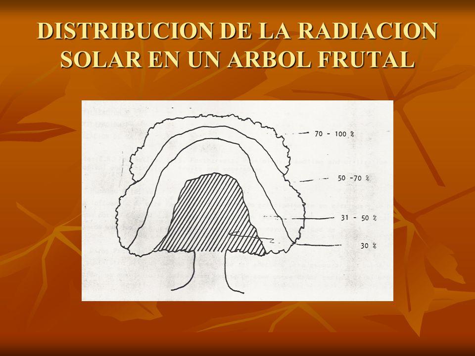 DISTRIBUCION DE LA RADIACION SOLAR EN UN ARBOL FRUTAL