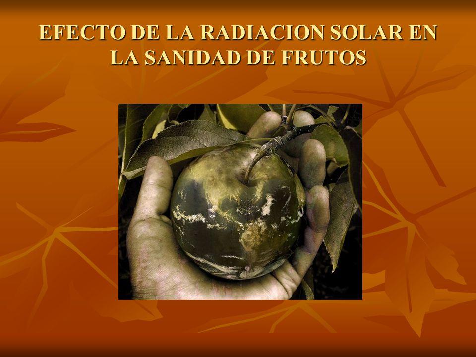 EFECTO DE LA RADIACION SOLAR EN LA SANIDAD DE FRUTOS